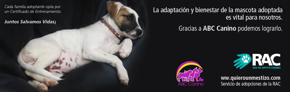 RAC y ABC Canino. Juntos Salvamos Vidas¡