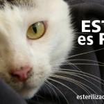 Esteriliza2