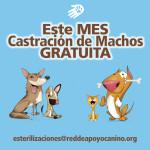 CASTRACION MACHOS GRATIS RAC