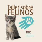 Taller Manejo de Felinos