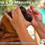 La vacunación de tu animal nos permite continuar ayudando a los animales de la calle