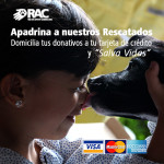 Domicilia tus donativos - Red de Apoyo Canino