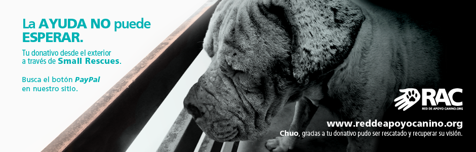 HEADER Small Rescues Chuo
