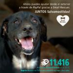 Resultados Esteriliza 2015 small rescues